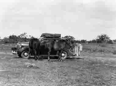 Hästar beundrar H 10 på alvaret vid Borgholms slottsruin 22 juli 1942